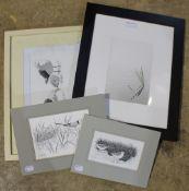 Four various ornithological prints