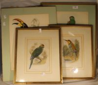 Two pairs of John Gould ornithological prints