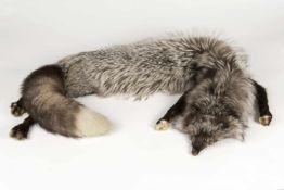 Silberfuchsschal mit Kopf und Füßchen, gebraucht;