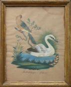 """Vogel-Federbild (19.Jh.) """"Rother Papagei und Schwan""""; hinter Glas gerahmt; ca. 27 x 21 cm"""