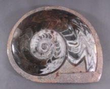 Großer Cleoniceras Ammonit (Kopffüßer), geschliffen/poliertCa. 105 Millionen Jahre, ca. H-6,5 cm,