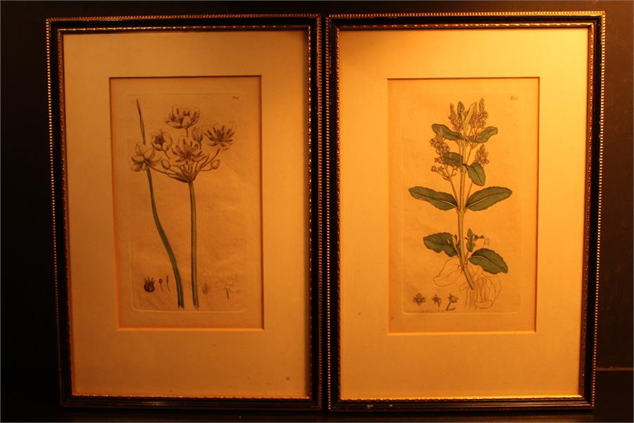 Lot 172 - Two Botanical coloured plates / prints after J.Sowerby numbered 651 & 655, the latter with print