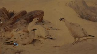 A framed limited edition print No 41 of 400 by A. Thorburn of ptarmigan in snow