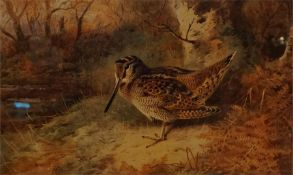 A framed limited edition print No 41 of 400 by A. Thorburn of Woodcock in woodland