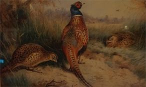 A family of pheasant feeding in the undergrowth, limited edition print 41 of 400 by A Thorburn