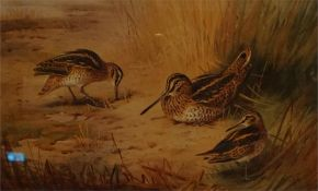 A framed limited edition print No 41 of 400 by A. Thorburn of snipe.