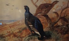 A framed limited edition print No 41 of 400 by A. Thorburn of capercaile in landscape