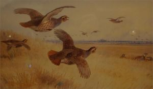A framed limited edition print No 41 of 400 by A. Thorburn of partridge in flight