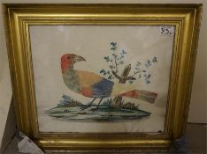 A pair of 19th century exotic bird feather pictures in gilt frames, with watercolour background