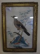 A 19th century gilt framed feathered bird picture, with watercolour back ground (possibly a jay)