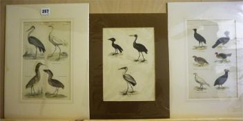A Group Of Eight Various Bird & Animal Prints, 25.5 x 16cm mounted on card, (8)
