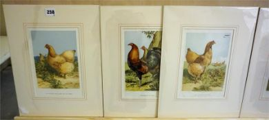 A Group Of Eight Assorted Poultry Prints, 23 x 15.5cm, mounted in card, (8)
