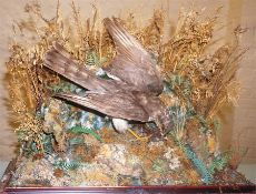 A Taxidermy Bird Of Prey With Their Young, raised on naturalistic branches and plinth base, 47cm