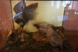 A Taxidermy Bird Group, in the form of a Poachard duck, Moorhen with chic, and an English Partridge,