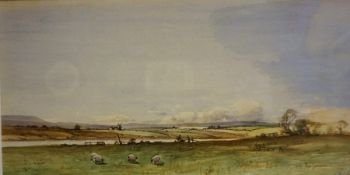 """Tom Campbell (Scottish 1865-1943) """"Sheep Grazing"""" Watercolour, signed lower right, 16.5 x 33cm,"""