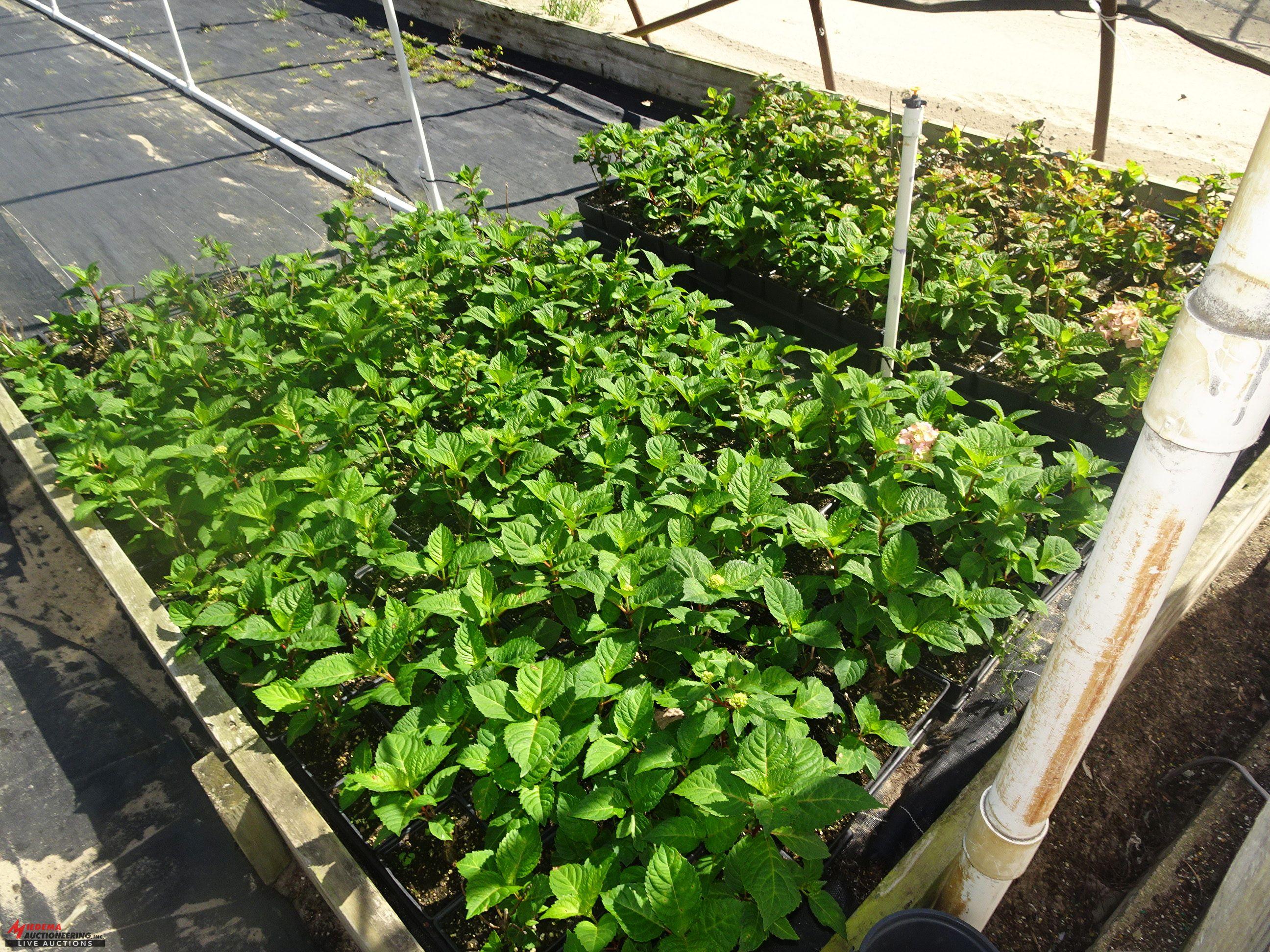 Gardens Alive Farms – MICHIGAN – Plant Auction