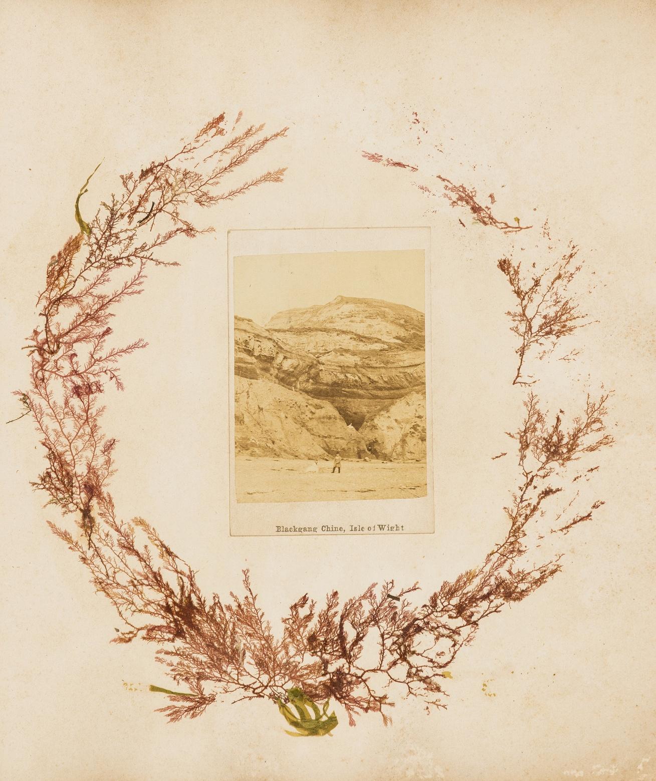 Seaweed.- Album of seaweeds, 1871.