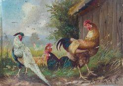 Hänger, Max, Junior (München, geb. 1898) Konkurrenz.Italienerhahn und Glucken, einen anderen Hahn