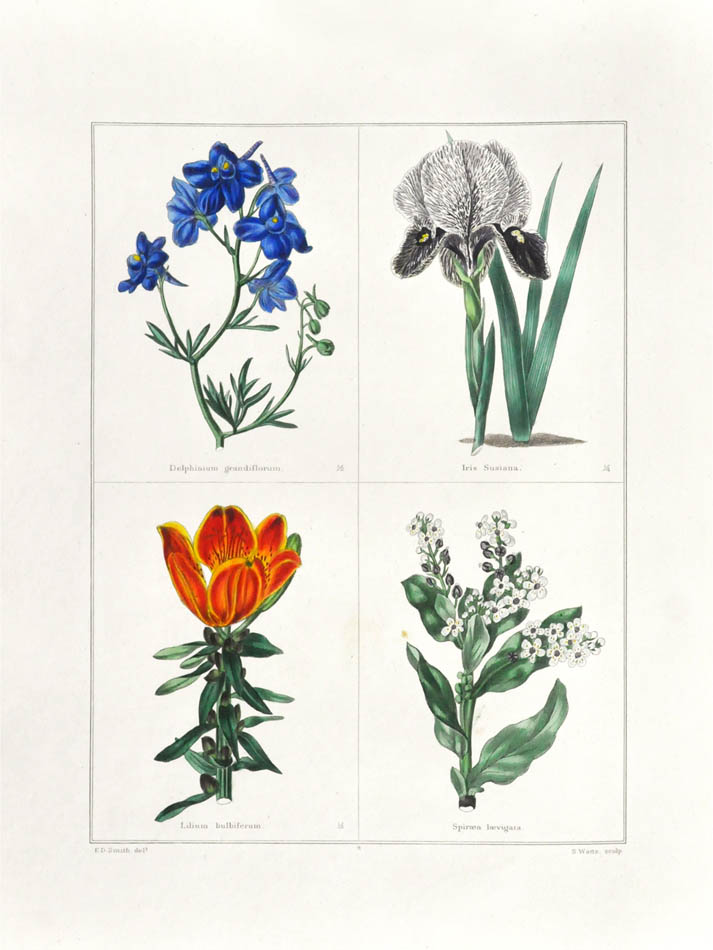 Lot 51 - MAUND, Benjamin. The botanic garden: