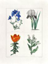 Lot 51 - MAUND, Benjamin. The botanic garden: