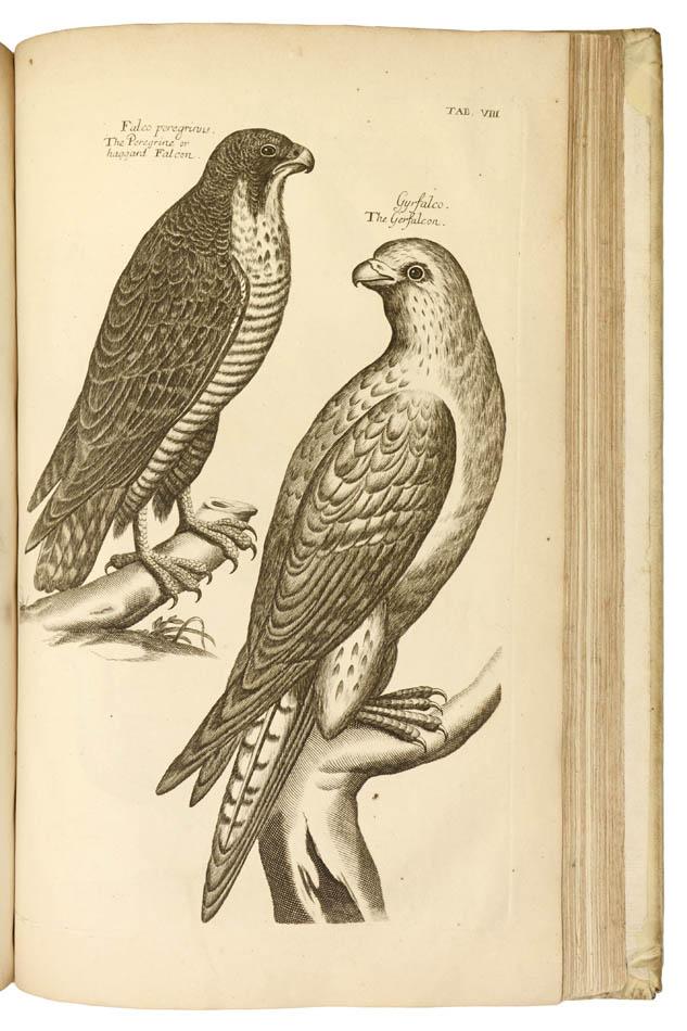 Lot 70 - Willughby, Francis; John Ray (ed.). Ornithologiæ libri tres.
