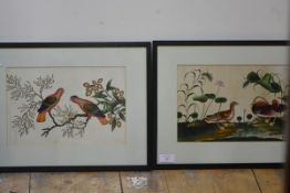 A pair of Chinese watercolours of birds, possibly 18th century, one of Mandarin ducks amidst lilies,