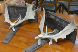 A pair of antler-mounted oak wall sconces, each rectangular top above a pair of crossed antlers