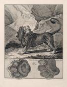 Johann Elias Ridinger, Sechs Tiere und ihre Spuren. 1740. Johann Elias Ridinger 1698 Ulm – 1767