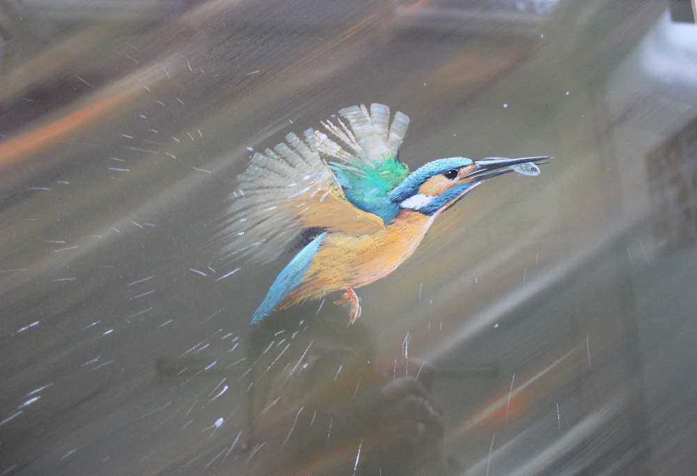 Lot 473 - Pollyanna Pickering A Kingfisher with a fish in its beak leaving the water Acrylics Signed and