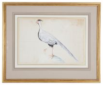 Colonial School, late 18th early 19th century 'White pheasant'