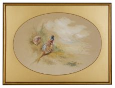 A watercolour study of a hen and cock pheasants signed James Stinton