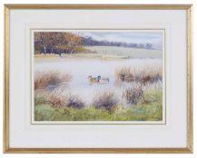 R Robgent (British, b.1937) 'Shoveler & Gadwall on the water', watercolour