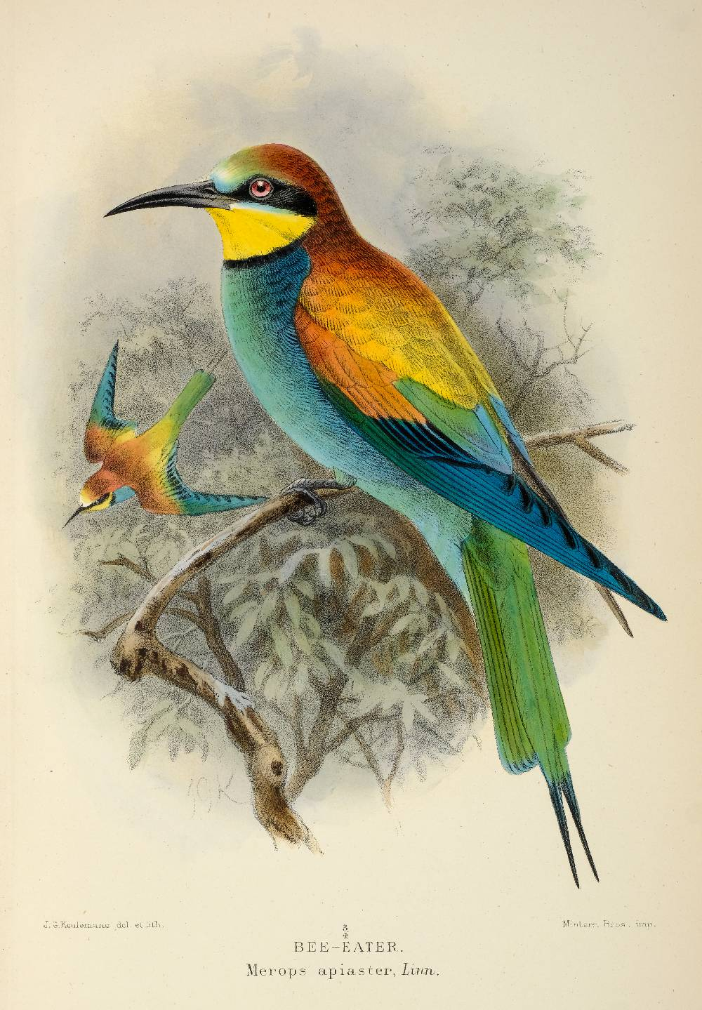 Lilford (Thomas Littleton Powys, 4th Baron ). Coloured Figures of the Birds of the British - Image 2 of 2