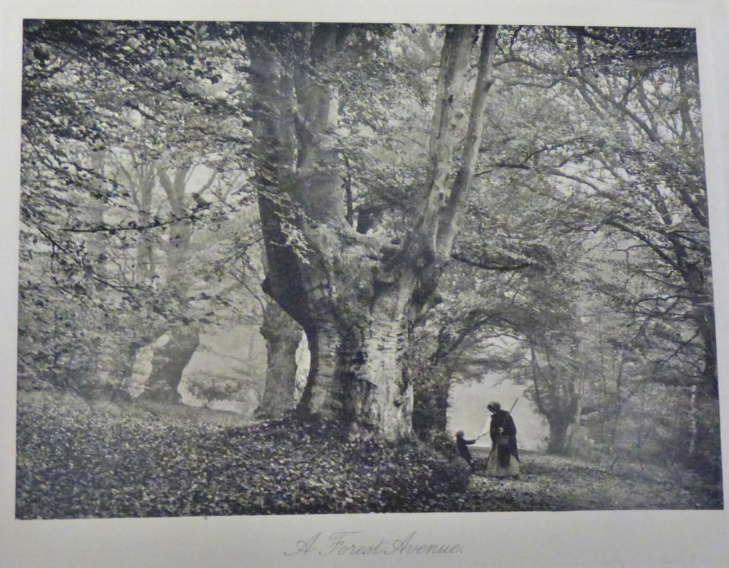 Lot 34 - Townley, Houghton - English Woodlands and their History Good, slight foxing to the edge