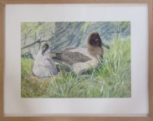 Framed watercolour of nesting birds by Richard Maitland Laws CBE FRS ScD (1926-2014) - Director of
