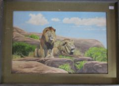 Framed oil on board of lions by Richard Maitland Laws CBE FRS ScD (1926-2014) - Director of