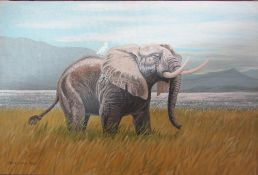Unframed oil on board of an elephant by Richard Maitland Laws CBE FRS ScD (1926-2014) - Director