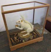 Cased white/albino squirrel in naturalistic setting H 36 cm L 33 cm D 19 cm