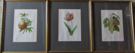 3 framed P J Redoute prints - tulip, cornichons blancs & grenade 47.