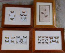 Selection of framed Edwardian prints of butterflies