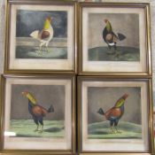 Set of 4 19th century cock fighting engravings - Yorkshire Hero, The Champion,