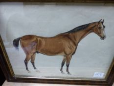 19th/20th.C.ENGLISH SCHOOL. A PORTRAIT OF A STALLION, AN INSCRIBED WATERCOLOUR. 24 x 32cms.