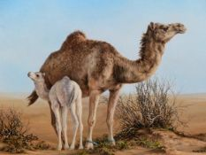 SUE CASSON (20th/21st.C.) (ARR) CAMELS, A SIGNED OIL ON CANVAS. 25.5 x 36cms.