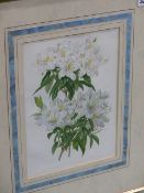 FOUR COLOUR BOTANICAL PRINTS IN BESPOKE FRAMES TOGETHER WITH ANOTHER AFTER A DIFFERENT HAND. (5)