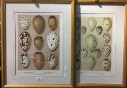 A set of four bird's eggs prints,