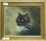 JANET BROOK, Portrait of a Cat, oil,