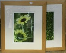 Two signed floral photographs,