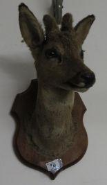 Lot 30 - Deer head - wall mounted