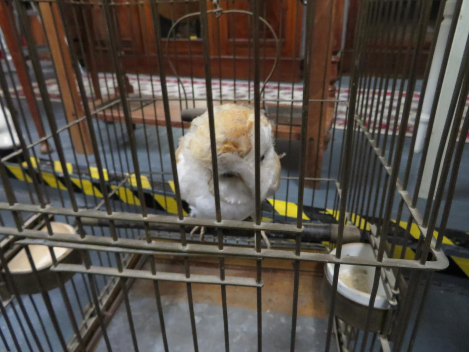 Lot 36 - Victorian brass bird cage containing taxidermy owl