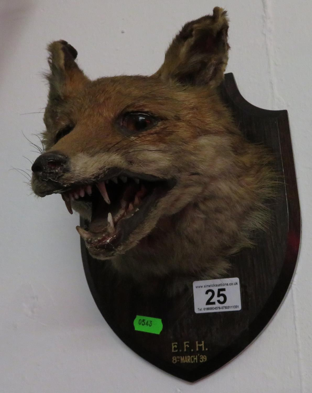 Lot 25 - Taxidermy fox mask